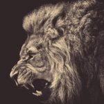 truth-confidence-lion